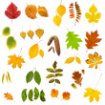 Leaf — Stock Photo #9519586
