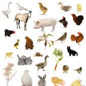Animal farms — Stock Photo