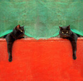 Two black cat on a red background — Stock Photo