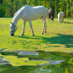 Horse — Stock Photo #9520176