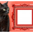 Cat stepping out of picture frame - Stock Photo
