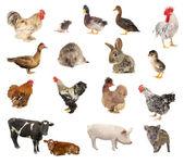Domací zvířata — Stock fotografie