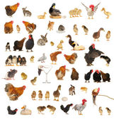 Animals — Foto Stock