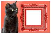 Resim çerçevesi adım kedi — Stok fotoğraf