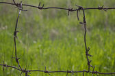 Barbed wire on a background a grass. — Stock Photo