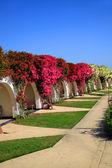 Garden of flowers — Stock fotografie