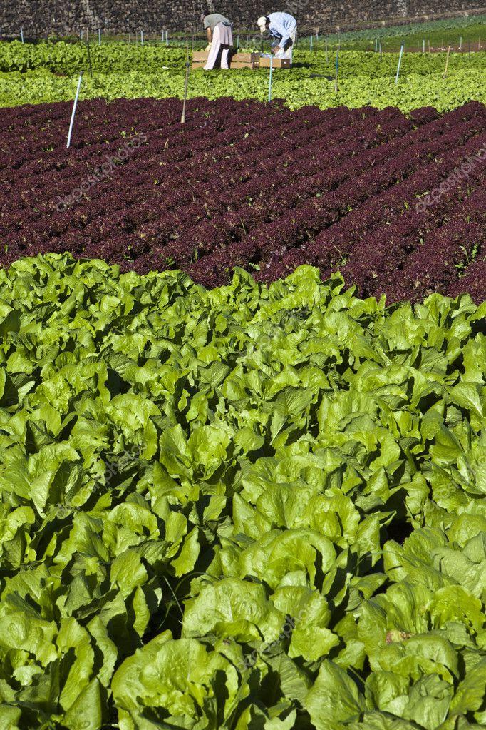 Фото салата под солнышко