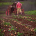 Potato field — Stock Photo #9443652