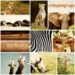 African Animals Safari Collage - Stock Photo
