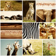 African Animals Safari Collage - Stockfoto