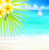 Tropical beach border — Stock Photo