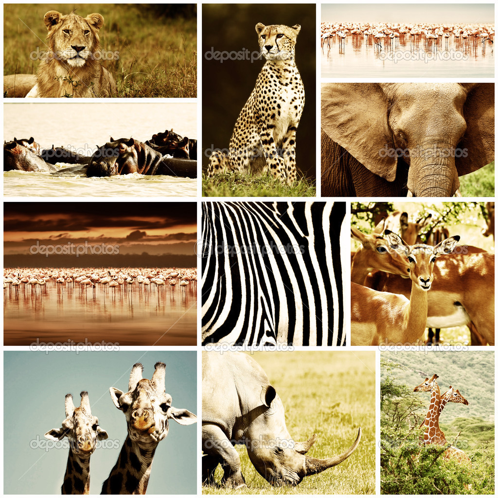 African wild animals safari collage, large group of fauna diversity at African continent, natural themed collection background, beautiful nature of Kenya, wildlife adventure and travel — Photo #10041110