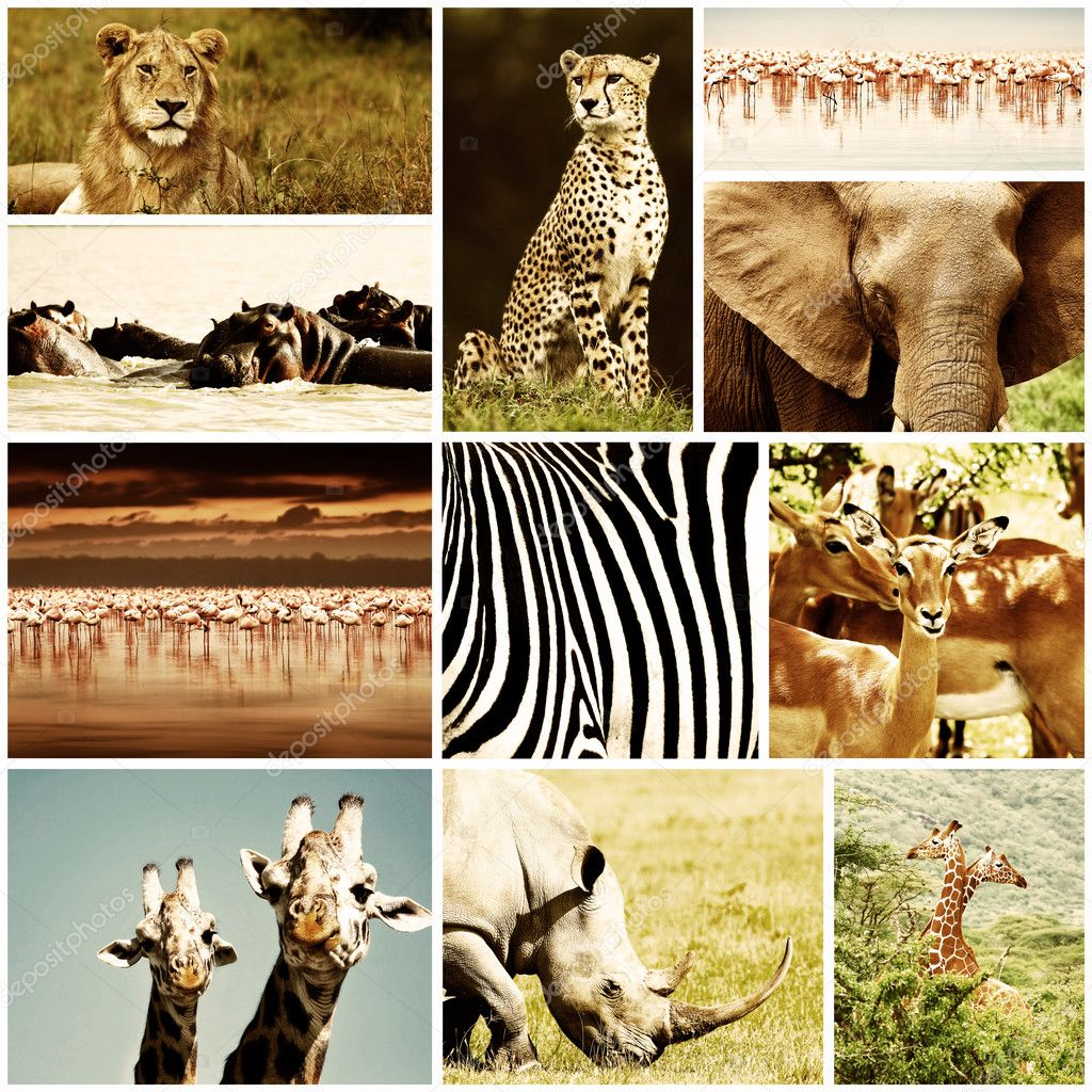 African wild animals safari collage, large group of fauna diversity at African continent, natural themed collection background, beautiful nature of Kenya, wildlife adventure and travel — Стоковая фотография #10041110