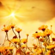 Flowers over warm sunset - Stock Photo