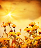Flowers over warm sunset — Stock Photo
