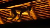 Running monkey slow motion — Stock Photo