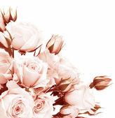 Frontera de rosas frescas — Foto de Stock
