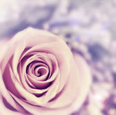 Dreamy rose abstract background — Stock Photo