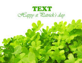 Green fresh clover border — Foto Stock