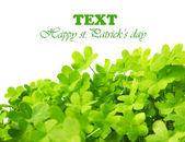 Groene verse clover grens — Stockfoto
