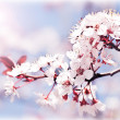 Blooming tree at spring - Stock Photo