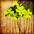 Fresh clover leaves over wooden background — Stock Photo #8987358