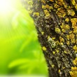 Spring forest abstract background — Stock Photo