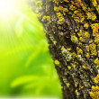 Stock Photo: Spring forest abstract background