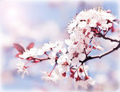 Blooming tree at spring — Stockfoto