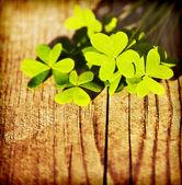 Folhas de trevo fresco sobre fundo de madeira — Foto Stock