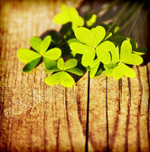 Fresh clover leaves over wooden background — 图库照片