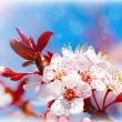 Blooming tree at spring — Stock Photo #9148781