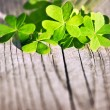 Fresh clover leaves over wooden background — Stock Photo