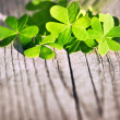 Fresh clover leaves over wooden background - Stock Photo