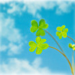 Abstract natural background, clover over sky — Stock Photo #9149961
