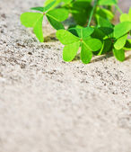 Fresh clover leaves over stone background — Stock Photo