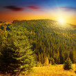 Colorful sunset at forests mountains — Stock Photo