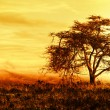 Big African tree silhouette over sunset - Stock Photo