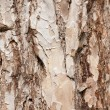 Background of pine bark — Stock Photo #10392401