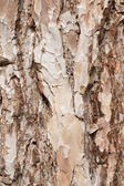 Background of a pine bark — Stock Photo