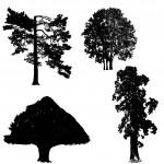 zwart-wit bomen collectie — Stockfoto