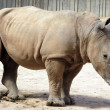 Stock Photo: Rhinoceros impressive