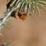 Ladybug on a thistle flower — Stock Photo #9153348