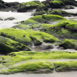 Rocks full of seaweed at low tide from a beach — Stock Photo