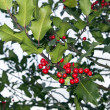 The natural holly tree — Stock Photo #9154164