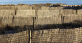 Fencing to secure the beach dunes — Stok fotoğraf