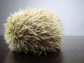 Posing little African hedgehog — Stock Photo