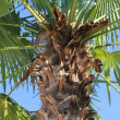 Stock Photo: Foreground of palm trunk