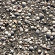 Thousands of shells on beach background — Stock Photo #9413033