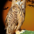 Bubo bubo eagle owl night bird - Stock Photo